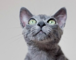 Nature Photography . The grey cat by idniphotography